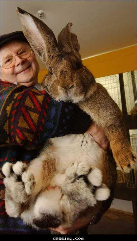 أرنب عملاق