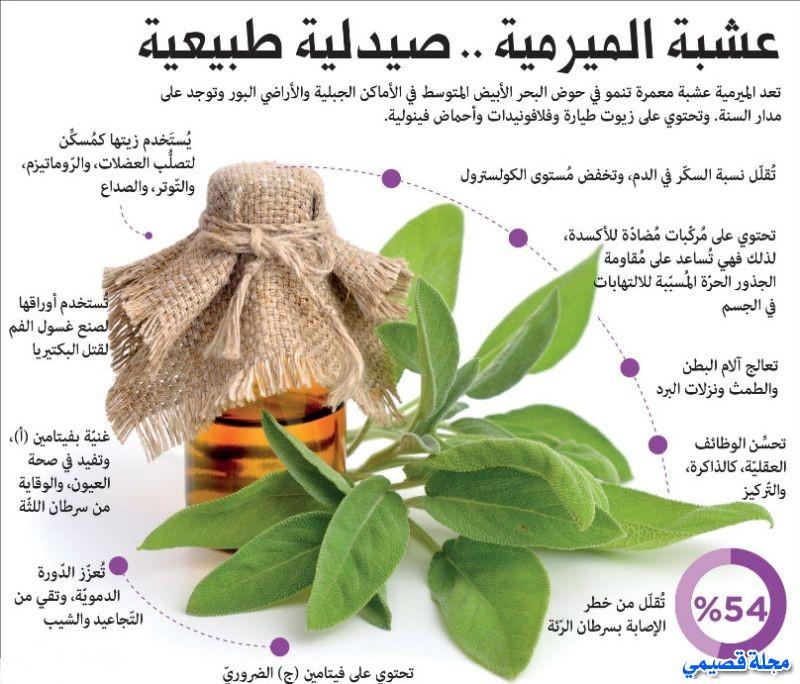 عشبة الميرمية - القصعين - el miramiya - salvia officinalis