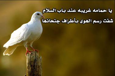 يا حمامه غريبه عند باب السلام - الهواوي
