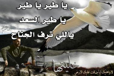 شيلة مسرعة يا طير يا طير يا طير السعد ياللي ترف الجناح mp3 معيض القحطاني